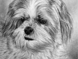 Drawing Of A Dog Biscuit Phew I Am Glad to Have Finished This One too Much Hair Lol It