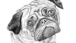 Drawing Of A Dog Footprint Pug 25 Print Art Drawing Ww Petsbypencil Co Nz Prints Draw
