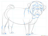 Drawing Of A Dog for Beginners How to Draw A Pug Dog Step by Step Drawing Tutorials for Kids and