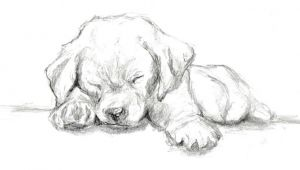 Drawing Of A Dog Hard Quick Graphite Sketch Of A Labrador Puppy Cat Drawing In 2019