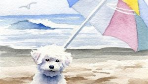 Drawing Of A Dog On the Beach Bichon Frise Art Print Bichon Frise at the Beach by Artist Dj