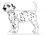 Drawing Of A Dog Step by Step Learn How to Draw A Dalmatian Dog Dogs Step by Step Drawing