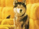 Drawing Of A Dog with A Bone 176 Best Give A Dog A Bone Images Drawings Of Dogs Cute Pictures