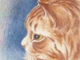 Drawing Of A Ginger Cat 626 Best Artistic Ginger Cat Love Images Ginger Cats Cat Drawing