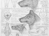 Drawing Of A Gray Wolf Differences Between Dire Wolves and Grey Wolves Via the Palaeocast