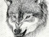 Drawing Of A Gray Wolf How to Draw A Growling Wolf Step 15 Drawing Lobos Dibujos