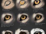 Drawing Of A Guy S Eye Wolf Eye Tutorial by themysticwolf Deviantart Com On Deviantart