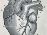 Drawing Of A Heart Human 82 Best Character Anatomy organs Images
