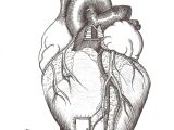 Drawing Of A Heart Human Home is where the Heart is Hate the Heart ist Art Drawings Ap