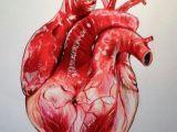Drawing Of A Heart organ Anatomically Correct Human Heart by Niku Arbabi Embroidery