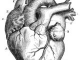 Drawing Of A Human Heart and Its Parts Diagram Of A Human Heart for Kids In 2019 Things I Like