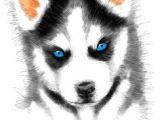 Drawing Of A Husky Dog 338 Best Huskies Reign Images Husky Drawing Husky Dog Animal