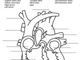Drawing Of A Labeled Heart 11 Inspirational Human Heart Coloring Pages Coloring Page