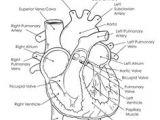 Drawing Of A Labeled Heart 15 Best Heart Diagram Images Nurses Nursing Notes Nursing
