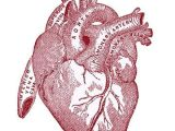 Drawing Of A Pink Heart Vintage Graphic Image Anatomy Heart Vintage Graphic Graphics