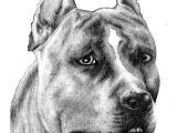 Drawing Of A Pitbull Dog Pencil Sketch Pitbull Pit Bull Drawings Art