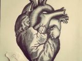 Drawing Of A Real Life Heart Anatomically Correct Human Heart by Niku Arbabi Embroidery