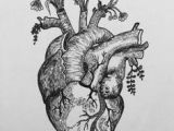 Drawing Of A Real Life Heart Pin by Rachel Waters On Ink Tattoos Tattoo Designs Body Art
