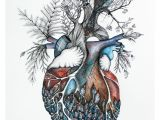 Drawing Of A Real Life Heart Watercolor Giclee Print original Painting by nora Heart