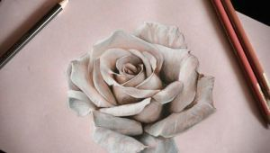 Drawing Of A Real Rose How to Draw A Realistic Rose In Pencil Drawings Drawings Art