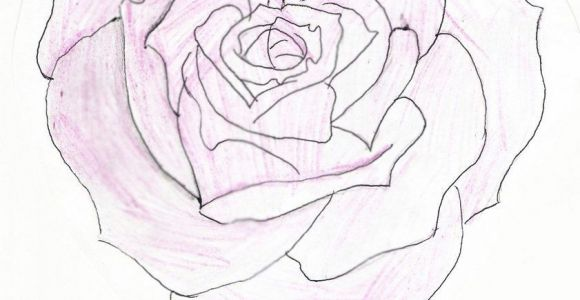 Drawing Of A Rose and Heart Heart Shaped Rose Drawing Heart Shaped Rose by Feeohnah Art