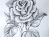 Drawing Of A Rose Easy 61 Best Art Pencil Drawings Of Flowers Images Pencil Drawings