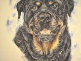 Drawing Of A Rottweiler Dog Gouache Painting Www Katyferrari Com Rotties Pinterest