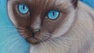 Drawing Of A Siamese Cat original Siamese Cat Art Colored Pencil by Artbylisamnelson Art