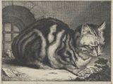 Drawing Of A Sleeping Cat Cornelis Visscher Ii the Large Cat Cornelis Visscher Ii 1657