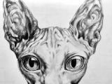 Drawing Of A Sphynx Cat 20 Best Sphynx Artwork Images Sphynx Cat Sphinx Cat Sphynx