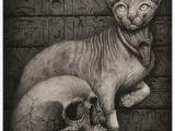 Drawing Of A Sphynx Cat Die 339 Besten Bilder Von Art Sphynx Sphynx Sphynx Cat Und Zbrush