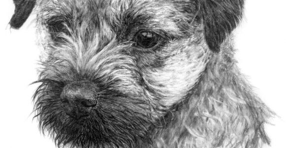 Drawing Of A Terrier Dog Image Result for Graphite Drawing Dog Border Terrier Border