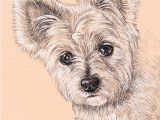 Drawing Of A Terrier Dog Lisa Creative Lab Custom Pet Portrait From Photo Dog Portrait