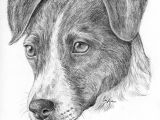 Drawing Of A Terrier Dog Pin Von Alissa Auf Hunde Pinterest Drawings Russell Terrier Und