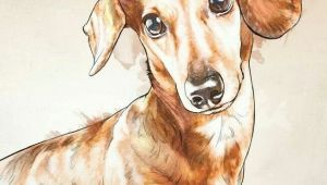 Drawing Of A Wiener Dog Dachshund Dachshund Teckels Images Pinterest Dachshunds