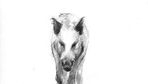 Drawing Of A Wild Dog Wild Boar Boar Wildschwein Old Gods In 2019 Wild Boar Animal