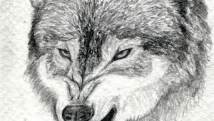 Drawing Of A Wolf Growling How to Draw A Growling Wolf Step 15 Art Drawings Wolf Drawing