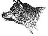 Drawing Of A Wolf Skeleton Vintage Clip Art Wolves Wolf Skull Halloween Art Clip Art