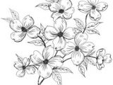 Drawing Of All Flowers 215 Best Flower Sketch Images Images Flower Designs Drawing S