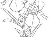 Drawing Of All Flowers 58 Best Draw Flowers Images Flower Designs Quote Coloring Pages