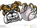 Drawing Of An Angry Dog Bulldog Dog Holding Baseball Ball Sports Mascot Stock Vector