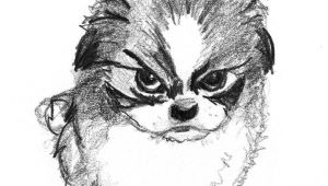 Drawing Of An Angry Dog Sketch Of Small Angry Dog Animals Sketches Drawings Dogs