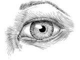 Drawing Of An Eye In Pen Resultado De Imagen Para Pen Sketches Of Nature Moleskine C E A E
