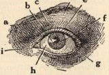 Drawing Of An Eye with Labels 121 Best Eye Anatomy Images Eye Anatomy Eyeball Anatomy Eyes