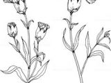 Drawing Of Carnation Flower 28 Best Line Drawings Of Flowers Images Flower Designs Drawing