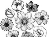 Drawing Of Cosmos Flower 11 Best Hibiscus Drawing Images In 2019 Hibiscus Drawing Hibiscus