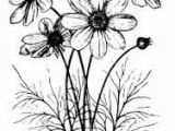 Drawing Of Cosmos Flower Cosmos Flower Drawing Google Search Zentangle Art Flowers