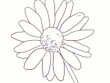 Drawing Of Daisy Flowers How to Draw A Realistic Daisy