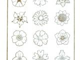 Drawing Of Different Flowers How to Draw Different Types Of Flowers Step by Step 25 Trending