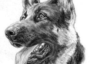 Drawing Of Dog German Shepherd Easy 484 Best Gsd Drawings Paint Images Pencil Drawings Animal